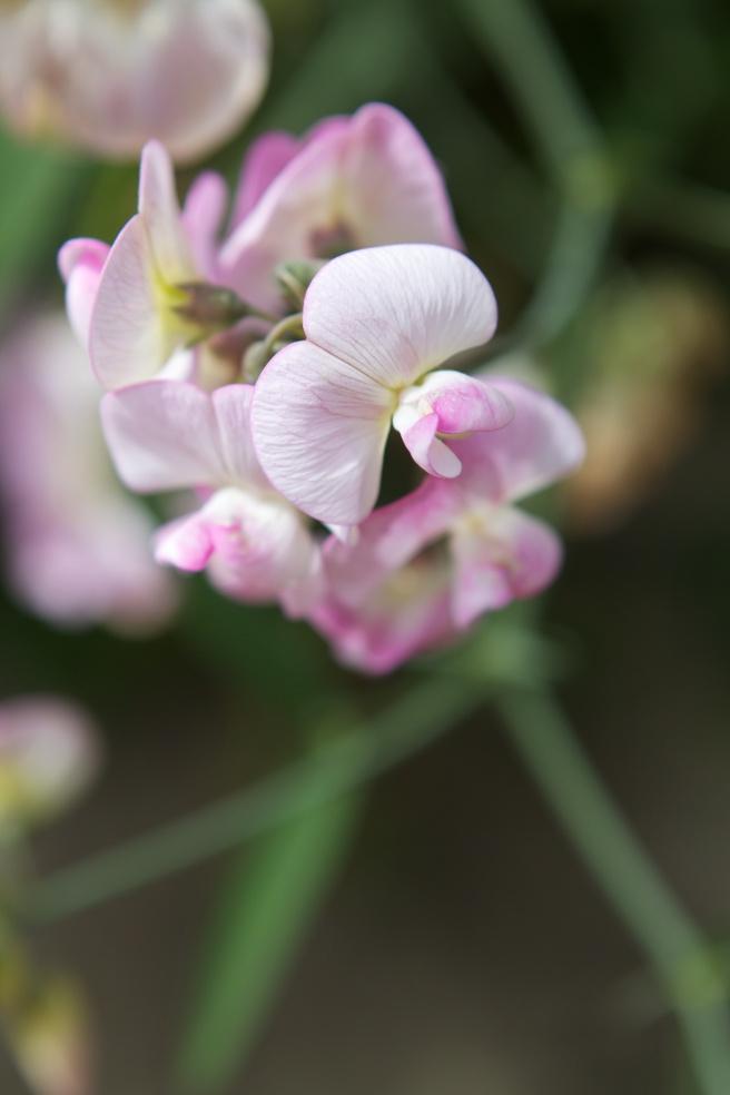 flower 2 005